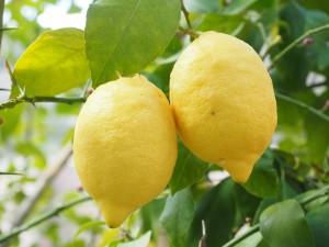 citrus luteolin