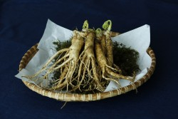 Panax Ginseng for health and testosterone