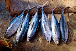 vit d3, tuna